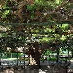 46-arbre