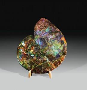 Sotheby's Ammonite Placenticeras