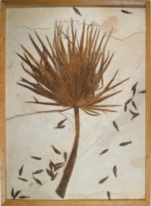 Sotheby's feuille de palmier fossilisée