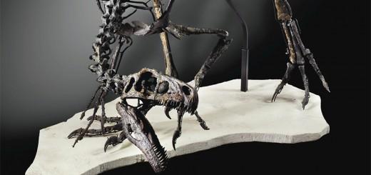 Vente Histoire Naturelle Sotheby's