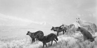 Orchestre des animaux, Fondation Cartier