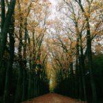 L'allée centrale du jardin en automne