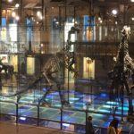 Les Iguanodons de Bernissard