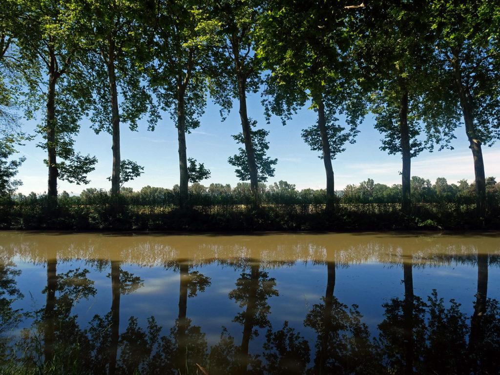 Sauvez les arbres du Canal du Midi !