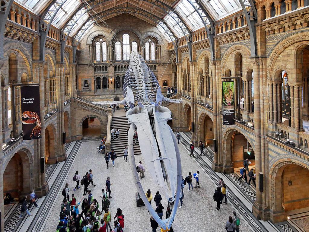 Hall du National History Museum (musée d'histoire naturelle) de Londres
