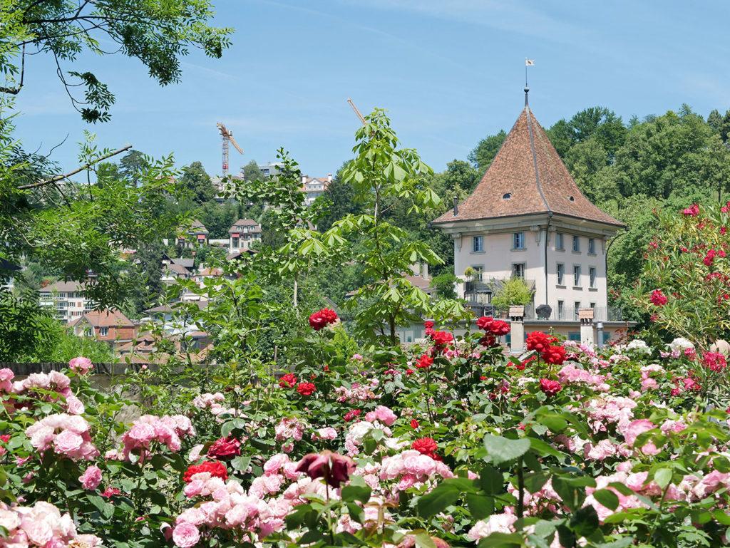 Jardin des Roses, Berne