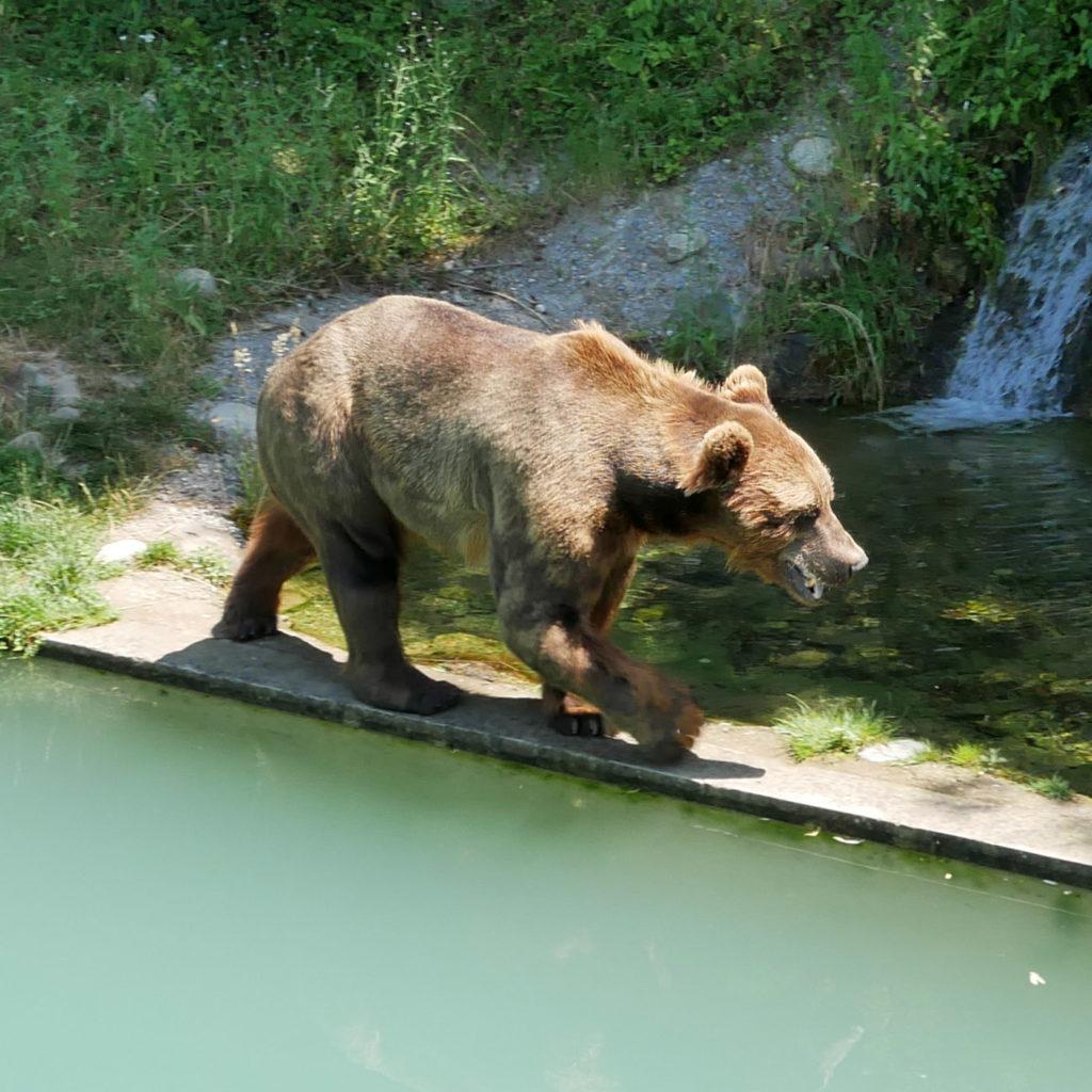 Parc des Ours, Berne