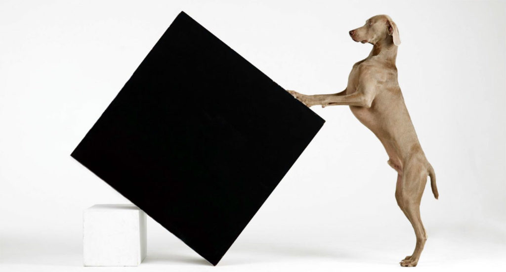 William Wegman, Constructivism