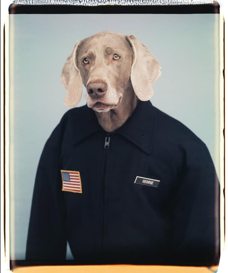 William Wegman, George
