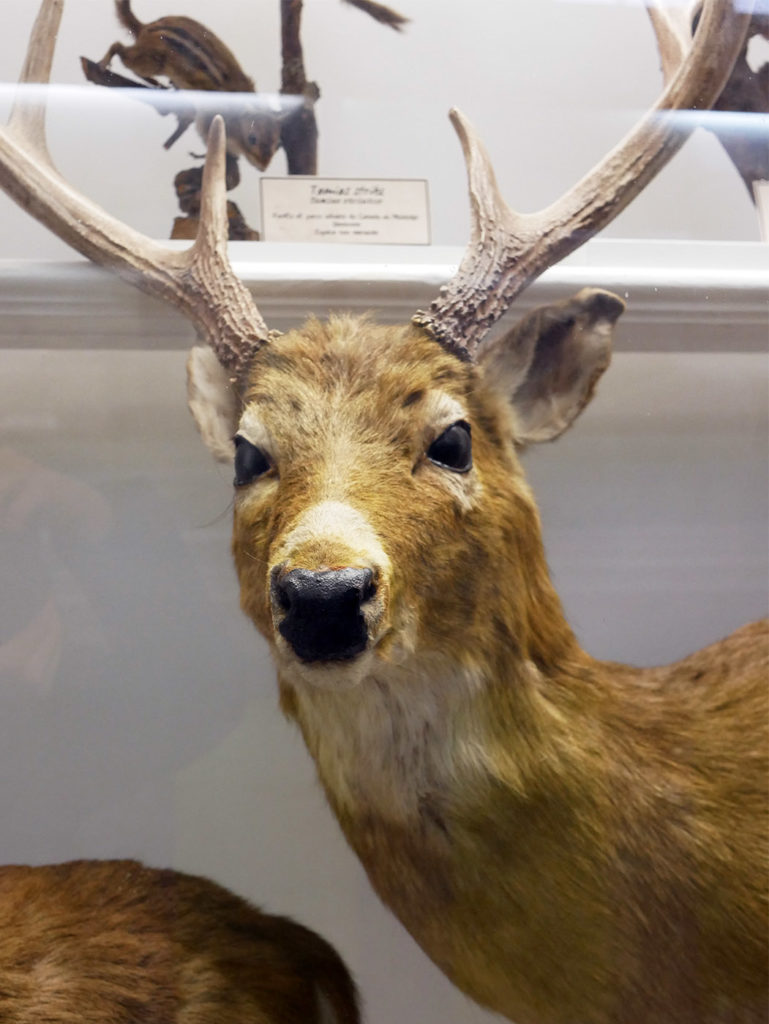 Museum d'histoire naturelle de Rouen