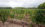 vineyards in gaillac